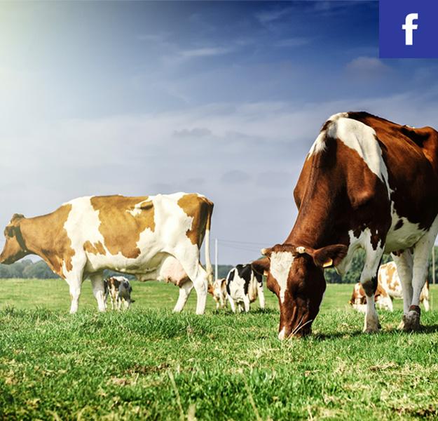 Polub nas na FB!